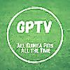 GP TV