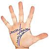 Palmistry Study