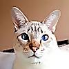 Mico Kitty