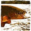 The Caddis Fly | Oregon Fly Fishing Blog